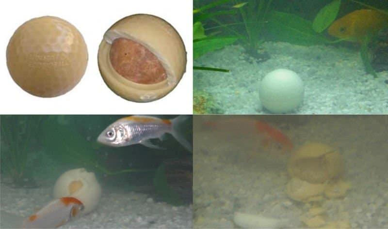 EcoBioBall. Pelota de golf que se convierte en comida para peces