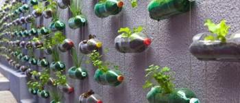 Jardín Vertical reutilizando botellas de plástico.
