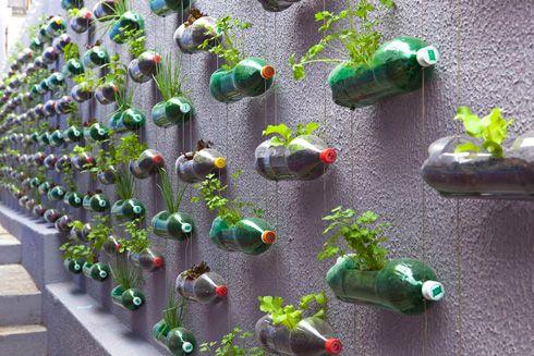 Jardín Vertical reutilizando botellas de plástico