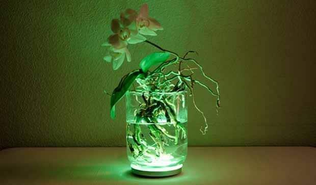Aura. Lámpara viva que cambia de color tocando sus pétalos y hojas