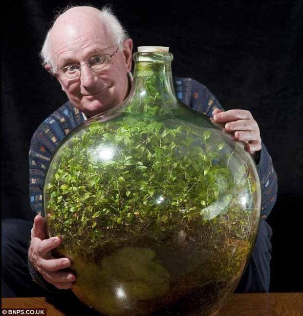 Un jardin de 53 años dentro de una Botella - Taringa! 10 Gallon Vivarium