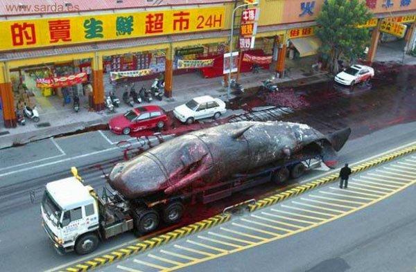 Cacería de ballenas