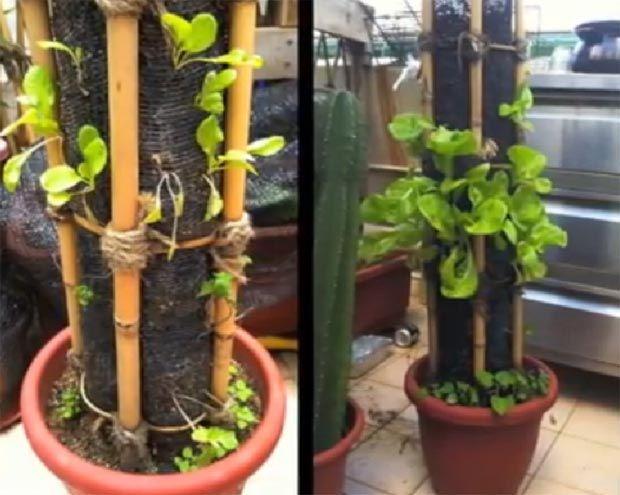 C mo hacer un jard n vertical casero paso a paso for Como hacer un jardin vertical con palets