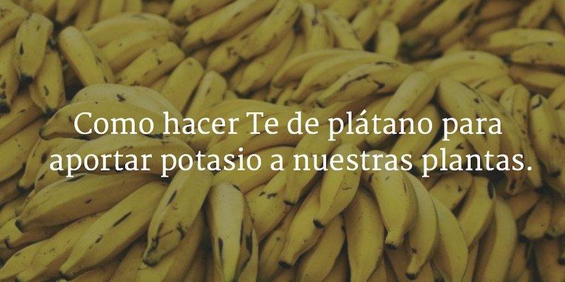 Como hacer Te de plátano