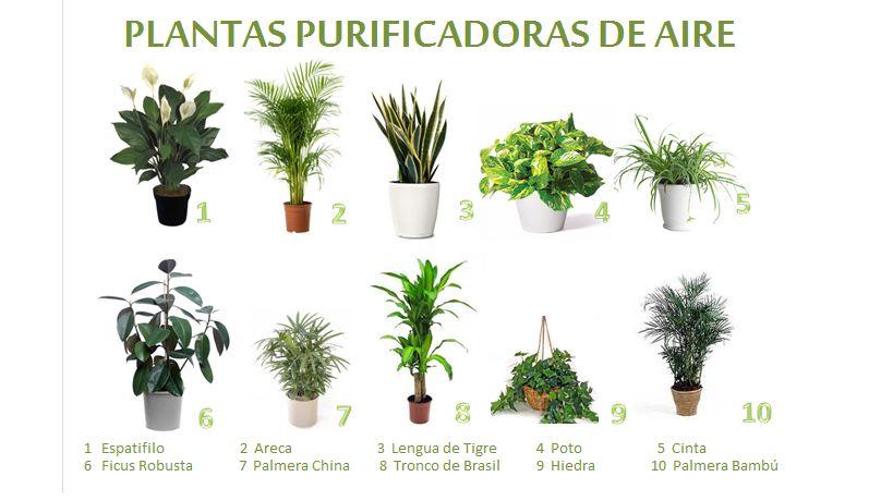 10 plantas que purifican el aire de tu casa taringa