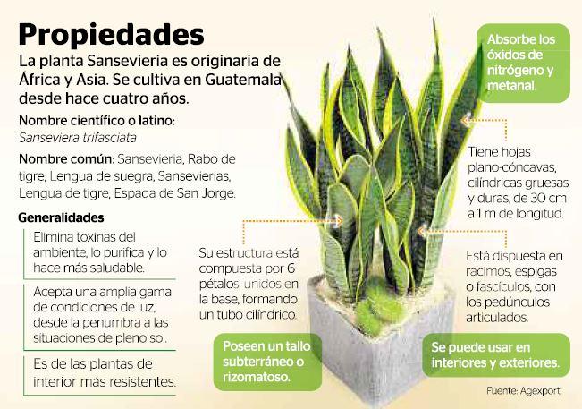 10 plantas que purifican el aire de tu casa taringa for Cuales son las caracteristicas de la oficina