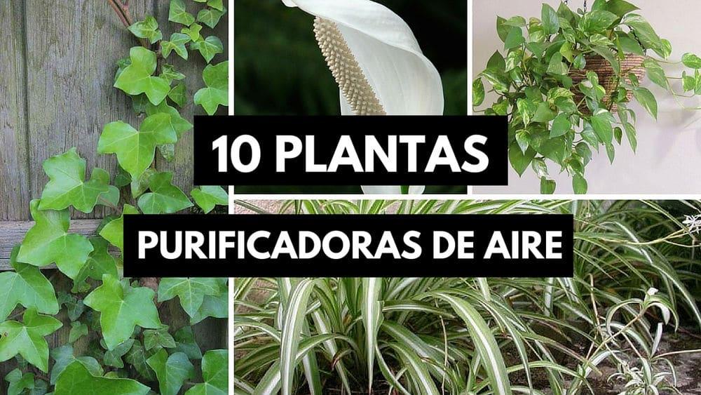 Plantas-que-purifican
