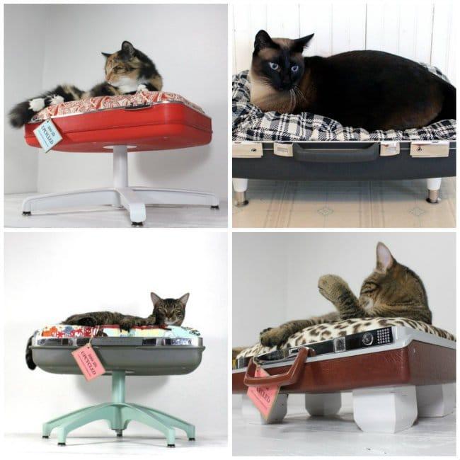maleta-cama-gatos
