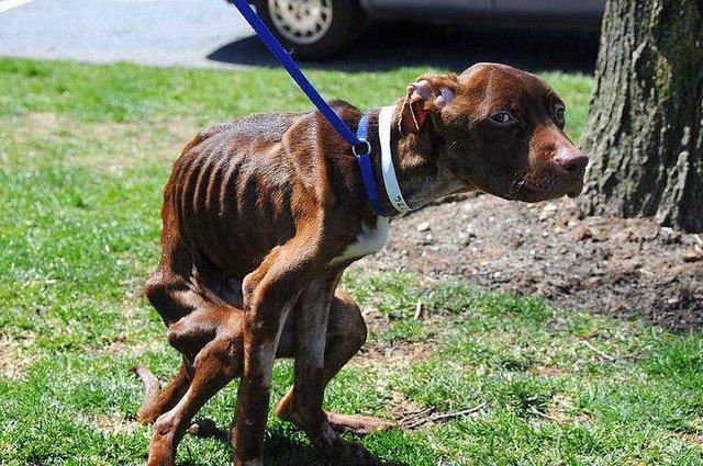 perro abandonado 4