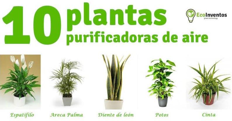 10 plantas que purifican el aire de tu casa