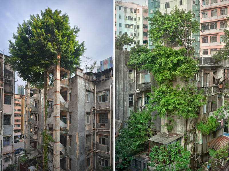 Arboles exóticos en Hong Kong