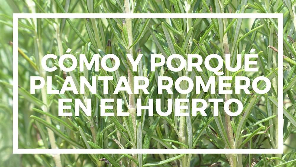 C%c3%b3mo-plantar-romero-en-el-huerto