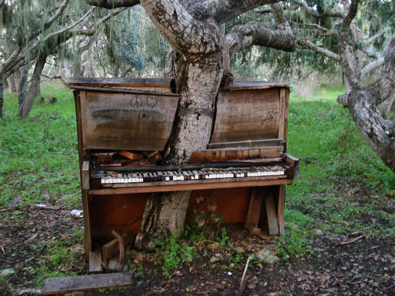 El viejo árbol del piano