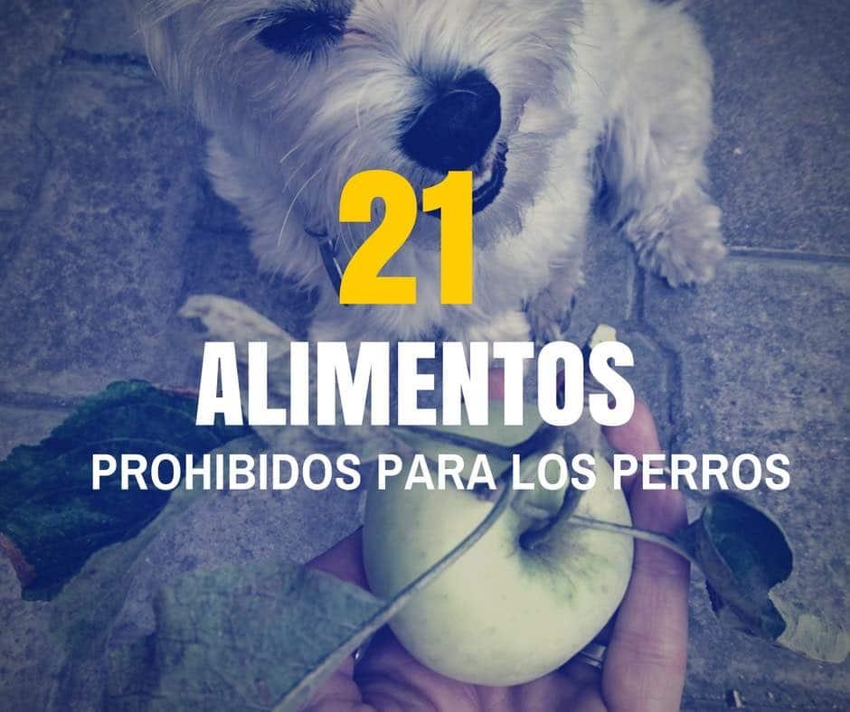 21 alimentos prohibidos para los perros