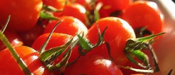 Como conseguir semillas de tomate