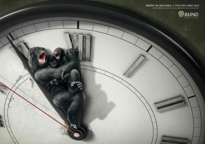Cada 60 segundos muere una especie1