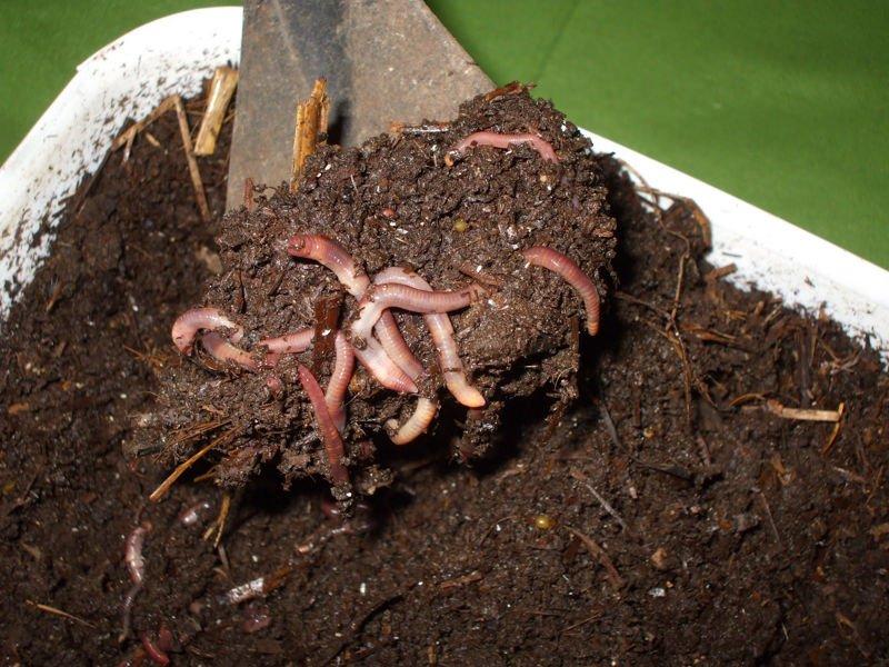 Beneficios del humus de lombriz en nuestro huerto o jardín