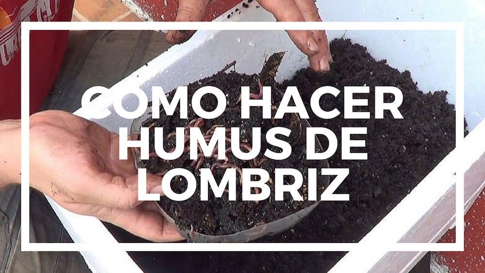 Cómo hacer humus de lombriz