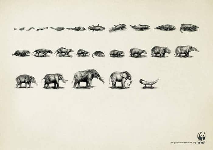 Evolución2