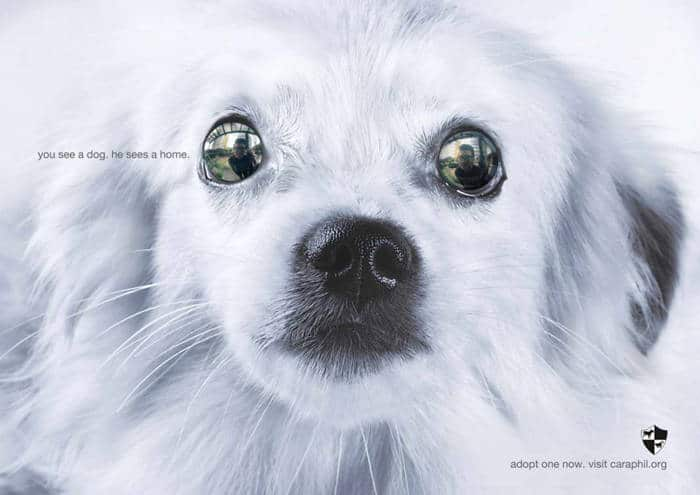 Tu ves un perro, el ve un hogar