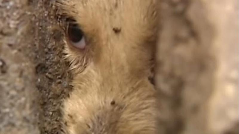 El emocionante rescate de un perro atrapado en una alcantarilla en China