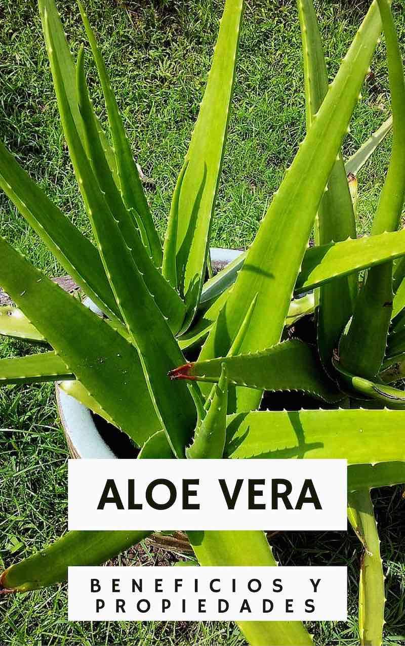Aloe Vera, la planta milagrosa