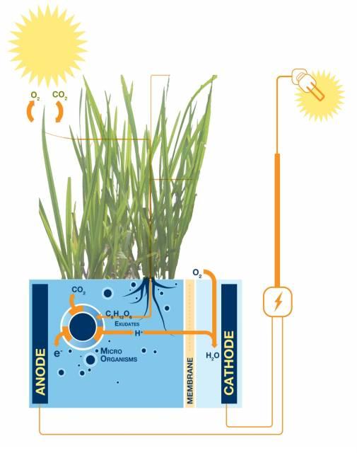Plant-e funcionamiento