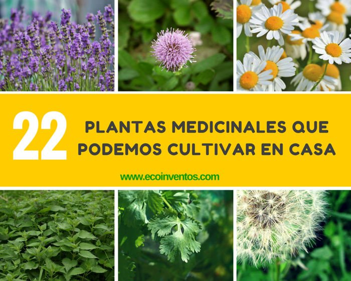 22 plantas medicinales que podemos cultivar en casa for Cuales son las plantas ornamentales y sus nombres