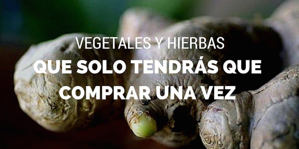 Vegetales-hierbas-solo-tendras-que-comprar-una-vez