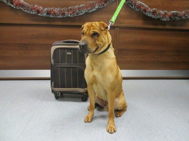 Kai perro abandonado con su maleta