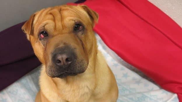 Un juez de Arizona ordena que todos los perros que se venden en las tiendas de mascotas deben venir de refugios