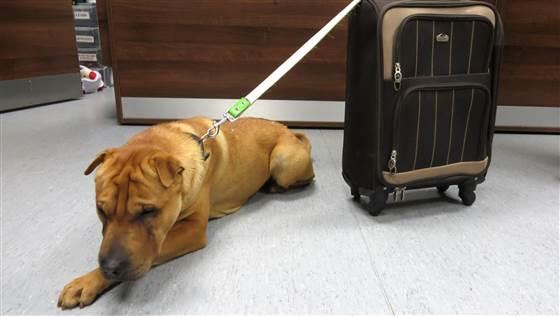Kai-perro-abandonado