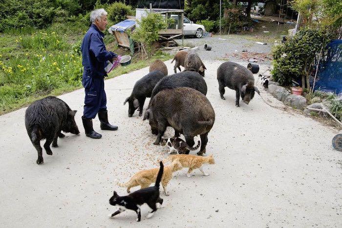 El Hombre que regresó a Fukushima para alimentar a los animales que se abandonaron1