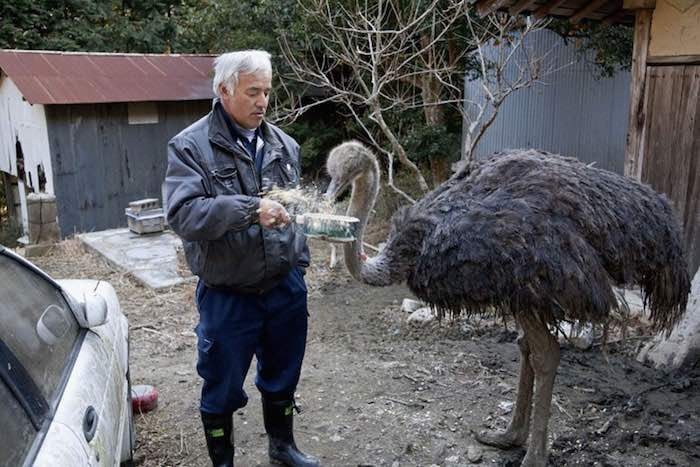 El Hombre que regresó a Fukushima para alimentar a los animales que se abandonaron11