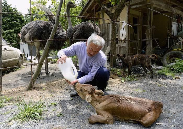 El Hombre que regresó a Fukushima para alimentar a los animales que se abandonaron3