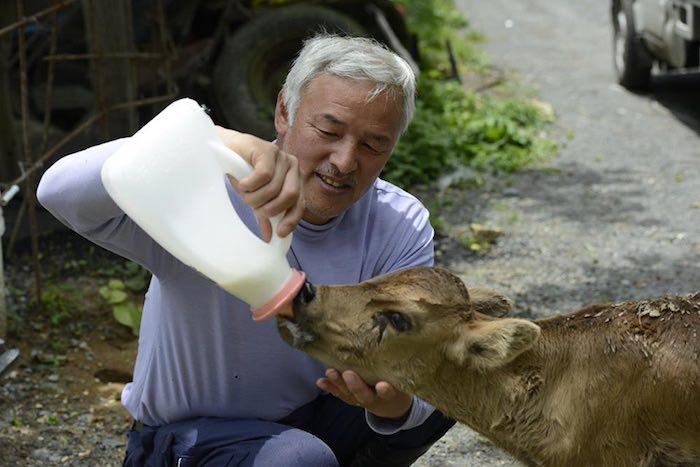 El Hombre que regresó a Fukushima para alimentar a los animales que se abandonaron5