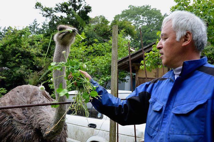 El Hombre que regresó a Fukushima para alimentar a los animales que se abandonaron7