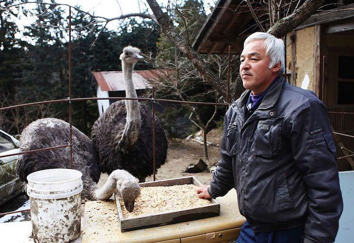 El Hombre que regresó a Fukushima para alimentar a los animales que se abandonaron9