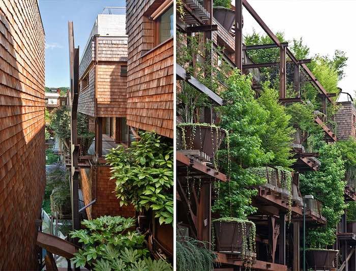 vivir en un bosque vertical2
