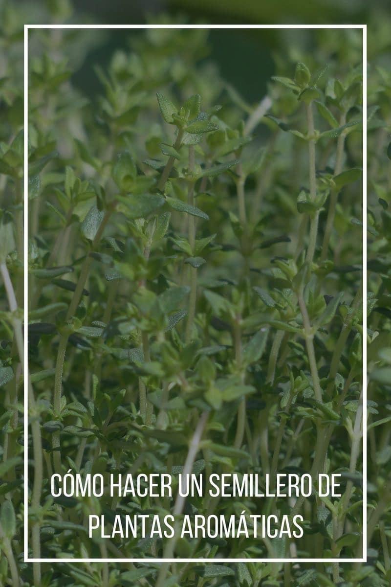 Cómo hacer un semillero de plantas aromáticas