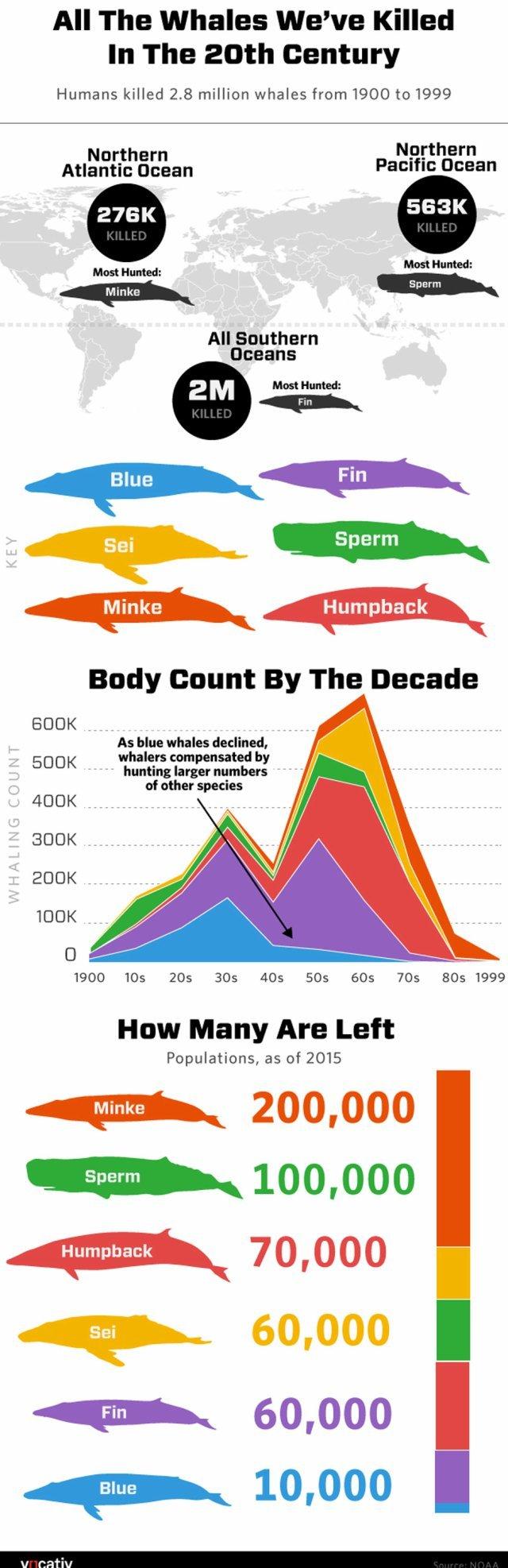 Los números del exterminio de ballenas en el siglo XX