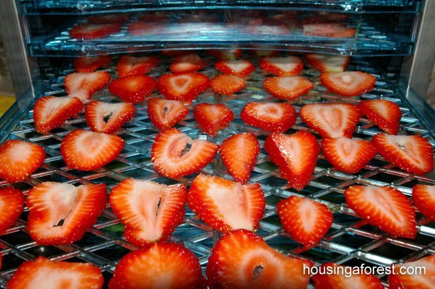 Como hacer fruta deshidratada fresas