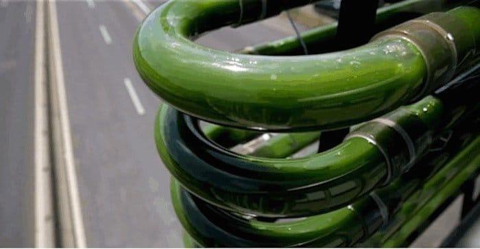 Algas que reciclan CO2 en autopistas