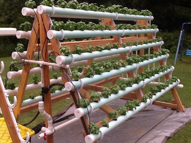 C mo crear un sistema hidrop nico casero con 168 plantas for Plantaciones verticales