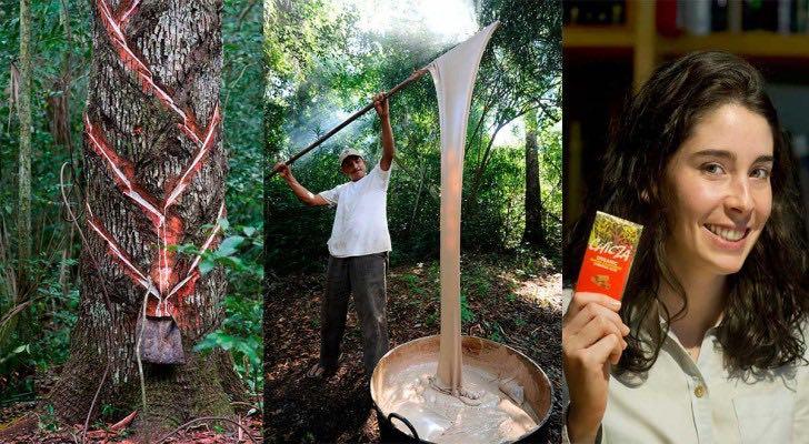 C mo se hace el chicle ecol gico 100 biodegradable for Como se extrae el marmol