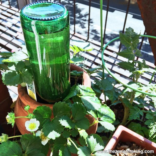 Como usar una botella de vidrio como sistema de regadío autónomo 6