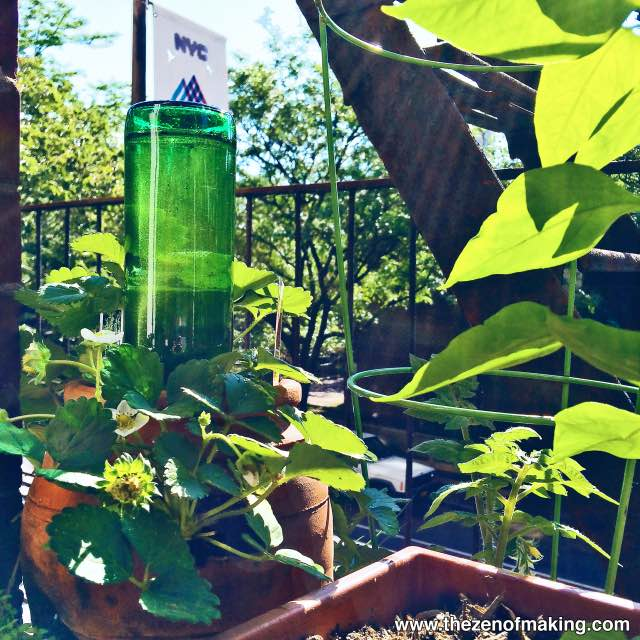 Como usar una botella de vidrio como sistema de regadío autónomo 8