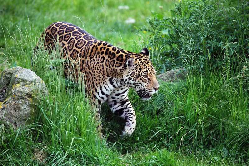 Costa Rica protege su vida salvaje