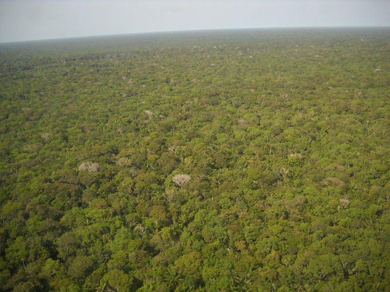 El planeta ha recuperado masa forestal en la ultima decada