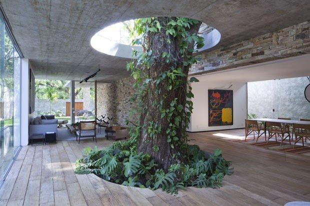 Estas personas hicieron todo lo posible para salvar el árbol de su casa 16
